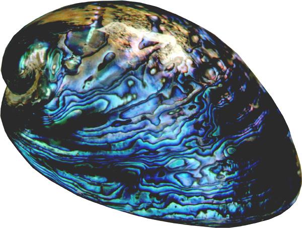 Gold Ring Found Ormeau